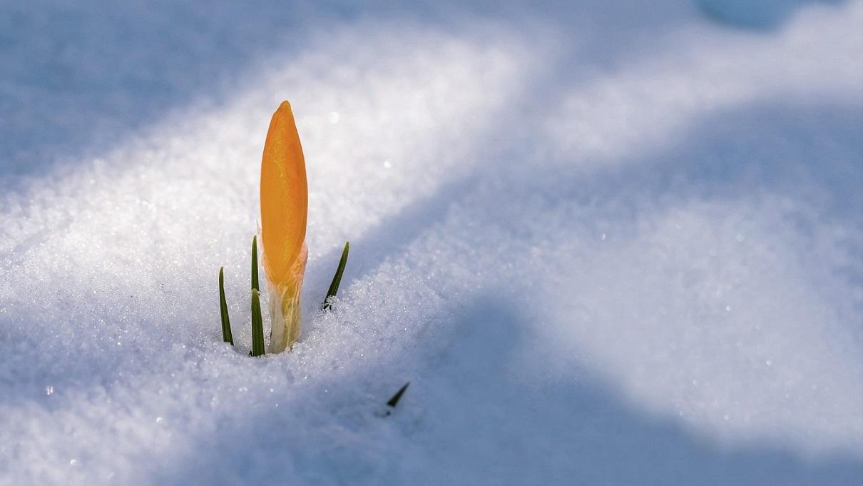 Die Botschaft des Frühlings